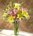 Edmonton Florist, 10 Stems of Asiatic Lilies in Vase/E513