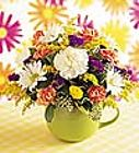 Edmonton Florist, Colorful & Cheery Cup arrangement/015