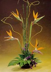 Edmonton Florist, Exotic Birds of Paradise arrangement/085