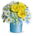 Edmonton Florist, Gerberas, Daisies,Hydrengea -Welcome to the World/049